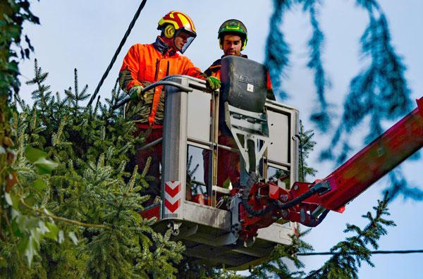 Marco Susenburger GmbH Baum- und Grünflächenpflege