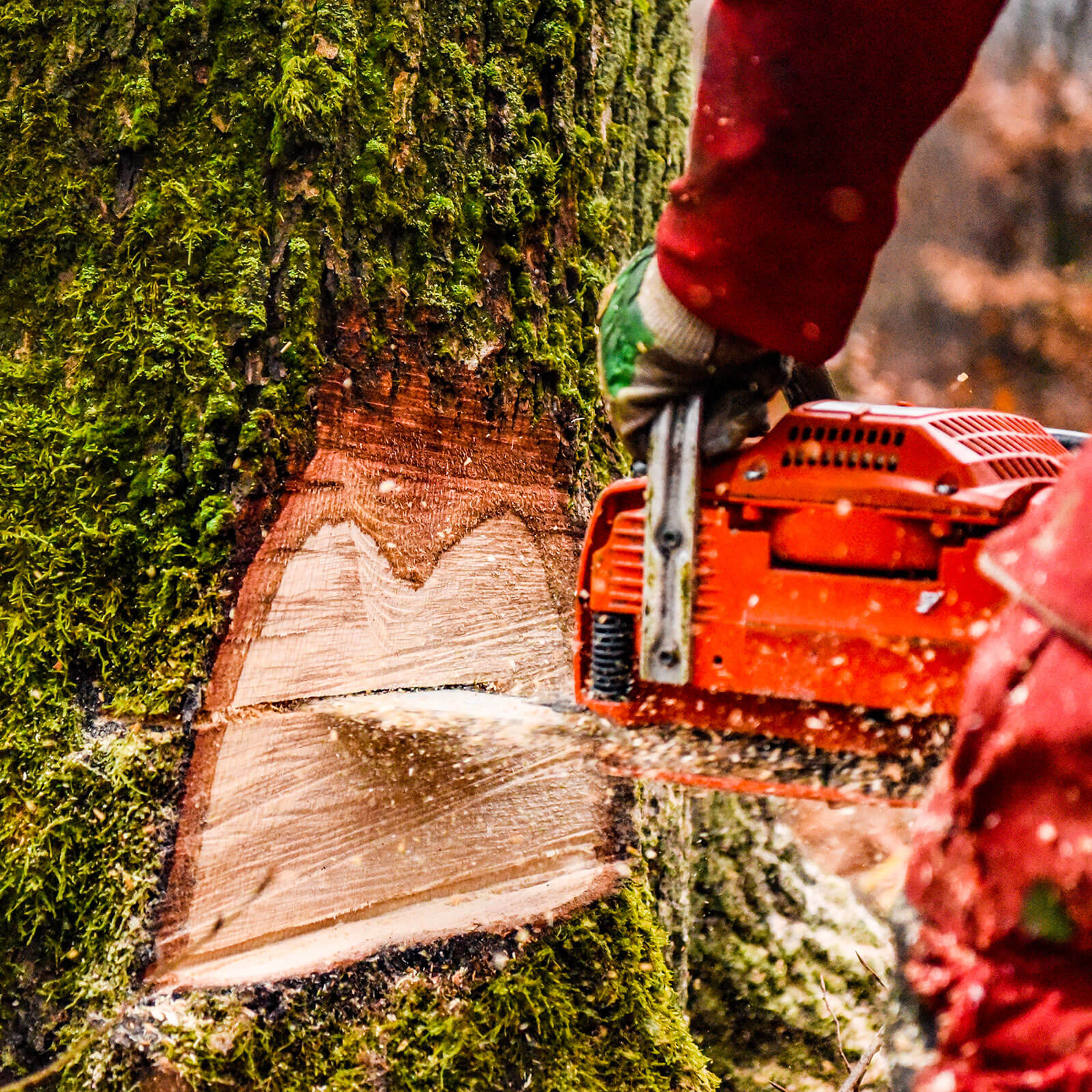 Susenburger Holzeinschlag