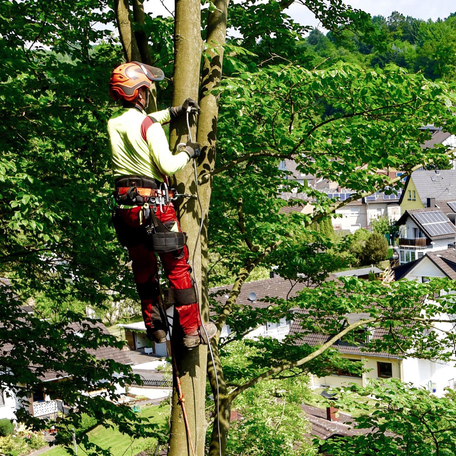 Susenburger Baumpflege